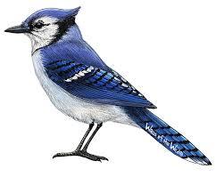 Blue Jay Wall Decal Bird Wall Decals Animal Wall Decals