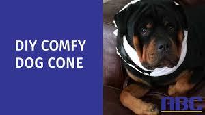 diy fy dog cone how to make a