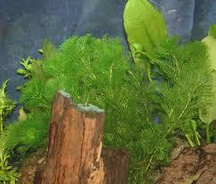 aquarium plant feeding and maintenance