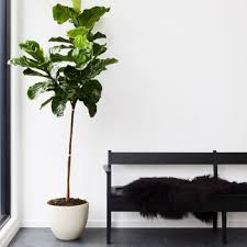 best indoor trees and tropical plants
