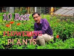 permanent flowering plants you can grow