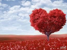 صور قلب حب صور قلوب رومانسية جميلة اجمل صور القلوب للأحبة روزة