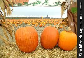 Pumpkin Patch Scene Free Stock Images Photos 1364584 Stockfreeimages Com