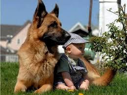 رمزيات كلاب اجمل صور للكلاب اجمل الصور