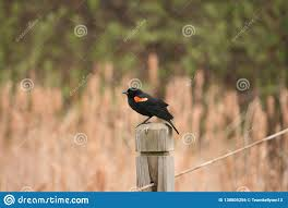 A Bird Standing On A Fence Post Stock Photo Image Of Bird Peaceful 130805256