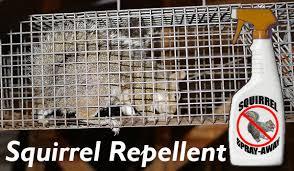 squirrel repellent spray powder