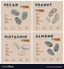 nut pecan peanut pistachio vector image