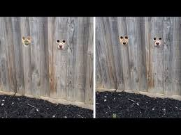Excited Dogs Poke Their Face Through Hole In Fence Youtube