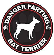 Amazon Com Ion Graphics Danger Farting Rat Terrier Sticker Decal Vinyl Dog Canine Pet 5 Bumper Locker Laptop Window Sticks To Any Surface Automotive