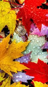 5k 4k wallpaper drops rain autumn