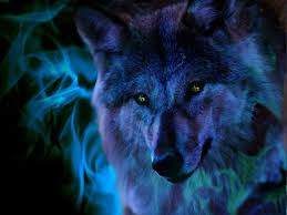 ice wolf wallpapers wallpaper cave