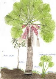 pinkpagodastudio: Abel Rodriguez--Rain Forest Trees