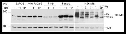 trpm8 expression and glycosylation