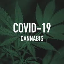 Cannabis, CBD Brands Feel Impact of COVID-19 | NOSH