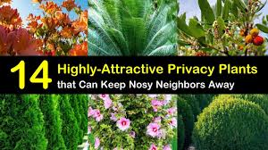 14 Highly Attractive Privacy Plants That Can Keep The Nosy Neighbors Away