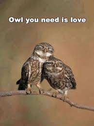 Owl you need | Owl, Owl photos, Pet birds
