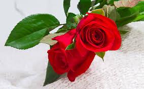 صور ورد حب اجمل صور لورد حب جميل ورومانسى المرأة العصرية