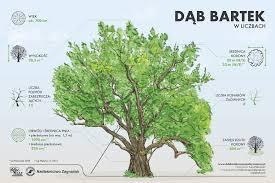 O Bartku na święto wszystkich drzew — Lasy Państwowe