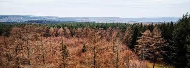 découverte de la forêt de saint hubert