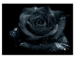 Black Rose Vinyl Wall Car Van Laptop Decal Sticker Ebay