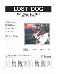 florida woman reunites with dog missing