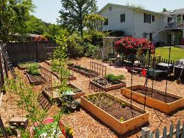 vegetable garden layout tips and guides