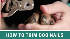 trim dog nails with clippers and file