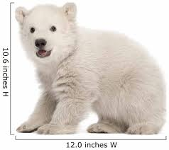Polar Bear Cub Sitting And Roaring Wall Decal Wallmonkeys Com
