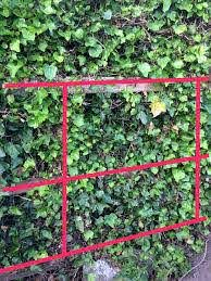 How Can I Stop Bushes Growing Through A Mesh Fence Gardening Landscaping Stack Exchange