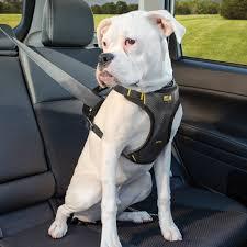 impact dog seat belt harness kurgo