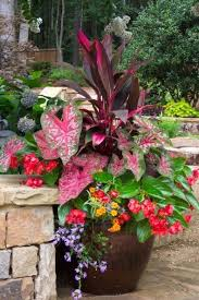 tropical container gardens