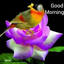 good morning friends fill your heart