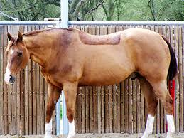 senior horse care your older horse s