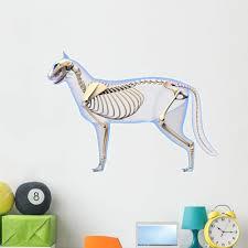 Amazon Com Wallmonkeys Cat Skeleton Anatomy Anatomy Wall Decal Peel And Stick Animal Graphics 48 In H X 48 In W Wm254005 Home Kitchen