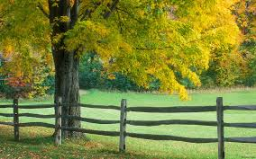 Different Types Of Split Rail Fencing Mccall Fencing