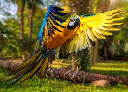 macaw parrot 5k hd birds 4k