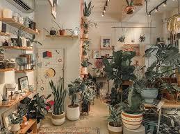 indoor plants in singapore