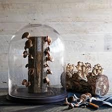 shiitake mushroom log kit williams sonoma