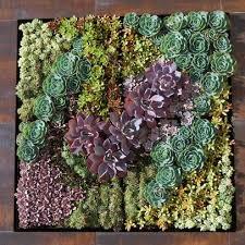 vertical wall garden of succulents