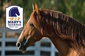 Find Your Morgan Horse Decal For Car Truck Horse Trailer Or Window Horse Gifts At Mary S Tack