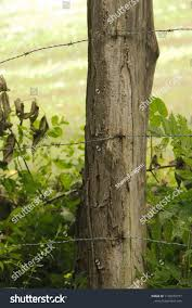 Old Wooden Fence Post Made Locust Stock Photo Edit Now 1139270777