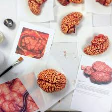 chocolate human brains edible museum