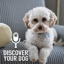 diser your dog
