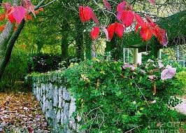 Red Leaves Green Ivy Stone Wall Photograph by Merton Allen