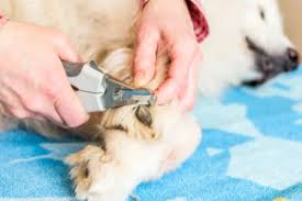 cut your dog nails without any pain