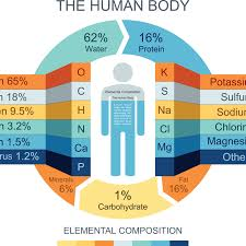 chemical position of the human body