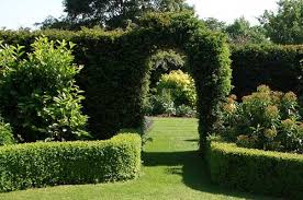 Fence Or Hedge Your Garden Which Is Best Successful Garden Design