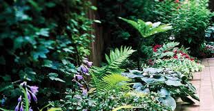 my enchanting cottage garden the 10