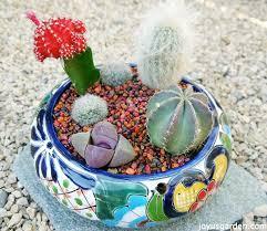 planting a cactus dish garden