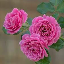 صور زهور صور لاروع الزهور بنات كول